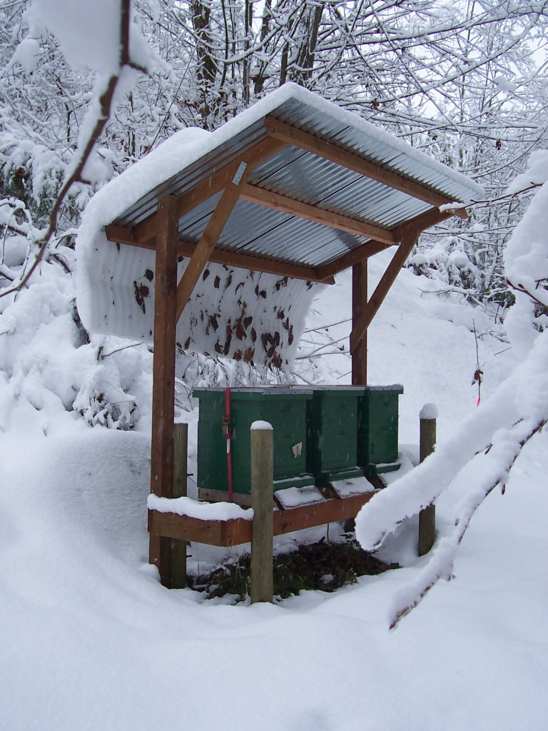 Winter Hive Check What To Look For Honey Bee Suite