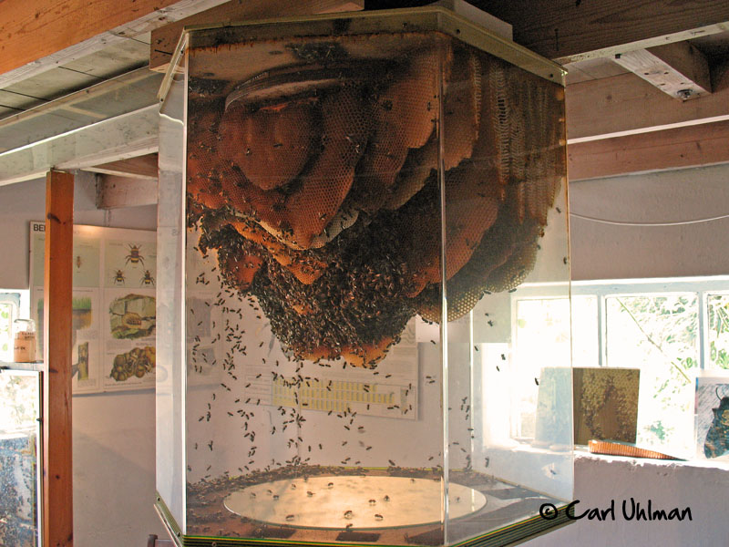 Beehive Honey. See-through glass house - YouTube