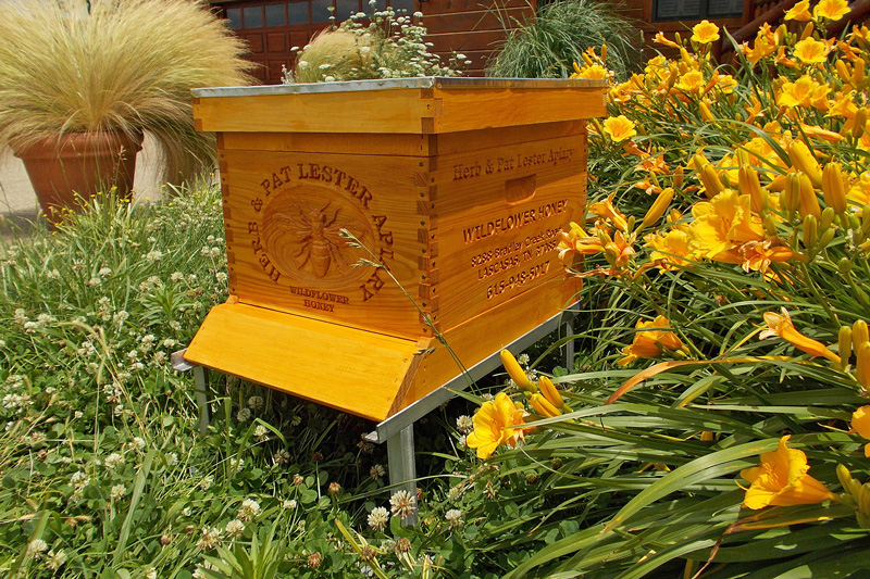 Lester-Apiary
