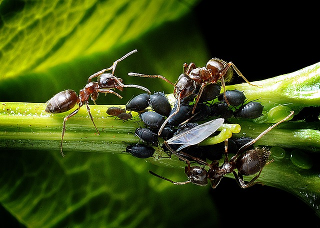how to get rid of bull ants in florida