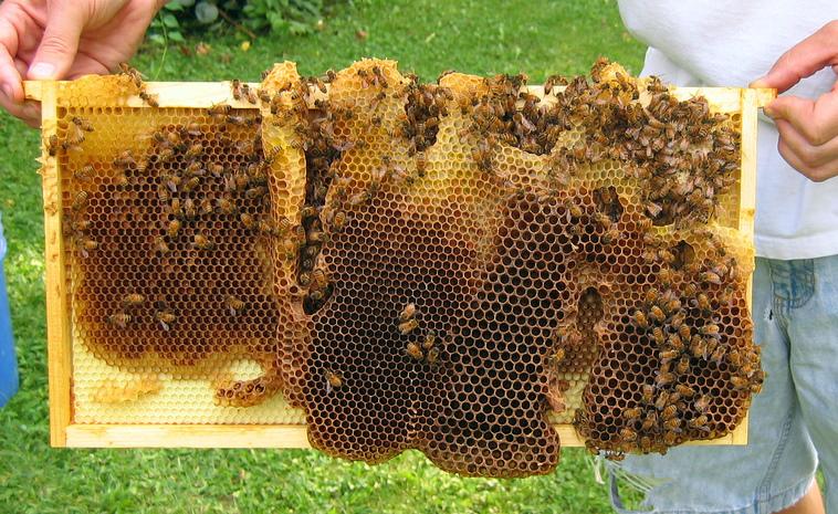 Strange Comb In Strange Places Honey Bee Suite