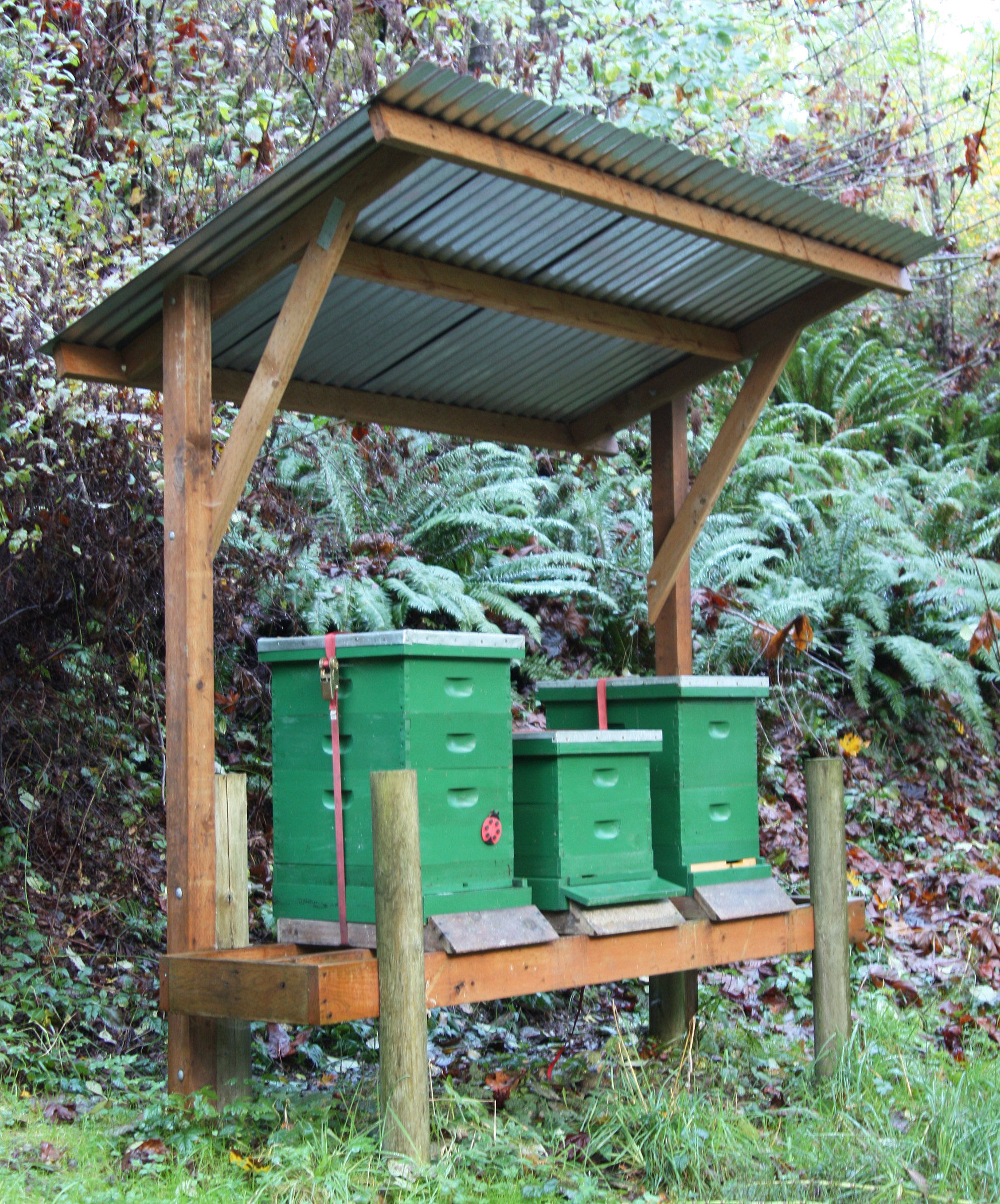 A Tip For Torrential Rains Hive Shelter Honey Bee Suite