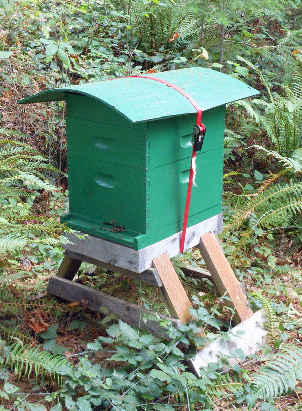A Very Simple Rain Shelter Honey Bee Suite