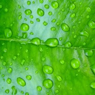 Water-drops-on-leaf-by Brett Jordan