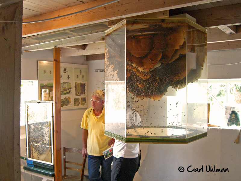 An Immense Observation Hive Honey Bee Suite