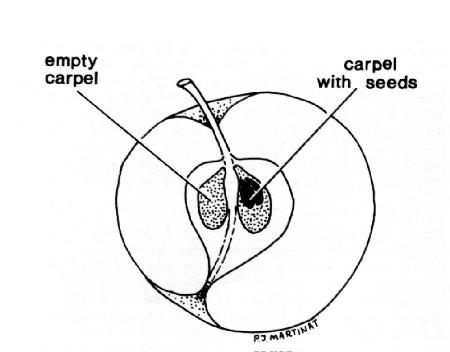 Incomplete Diagram