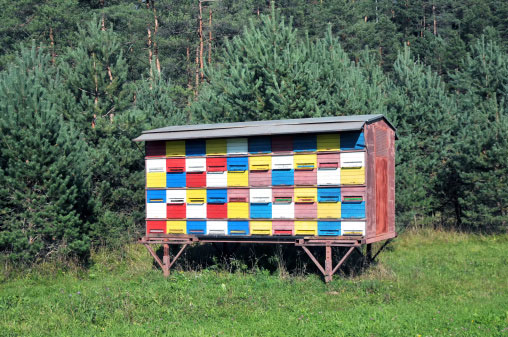 Mobile bee house in Slovenia. Photo by Branko Habjah.