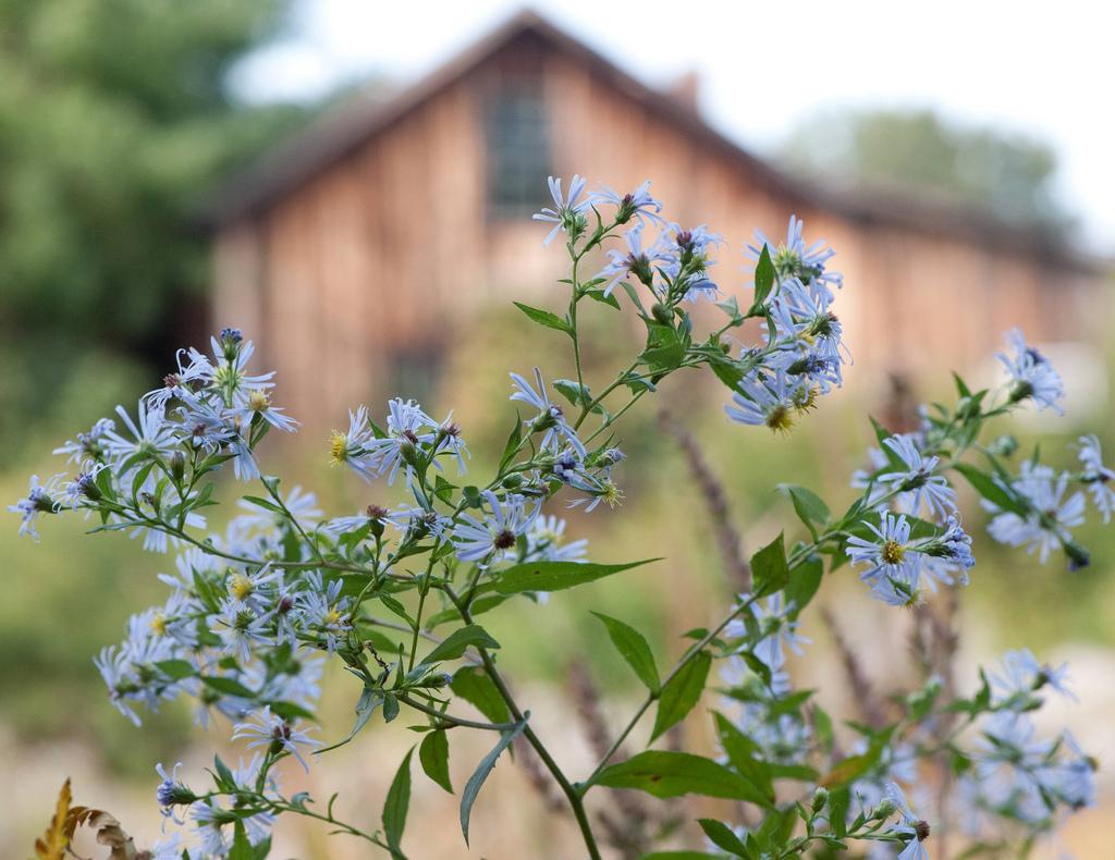 Asteraceae family plants often produce stinky honey.