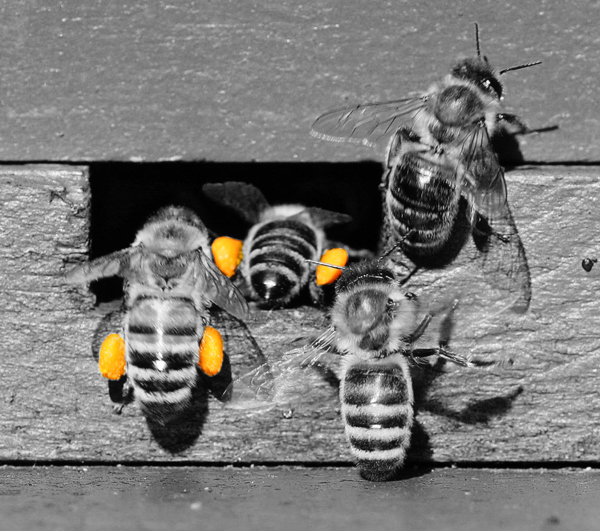 pollen-baskets-2