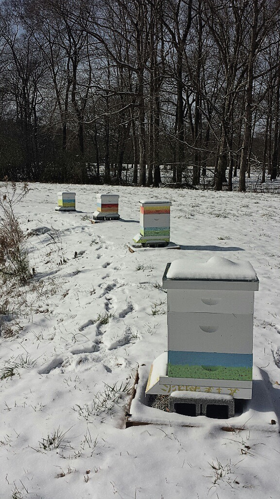 The-Robertson-Farm-in-winter-ed