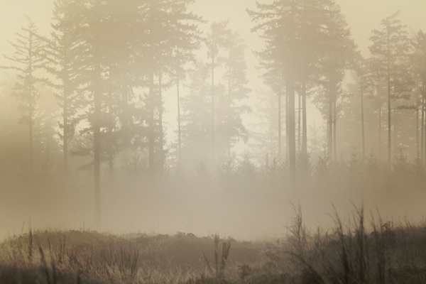Mima-Prairie-at-sunrise
