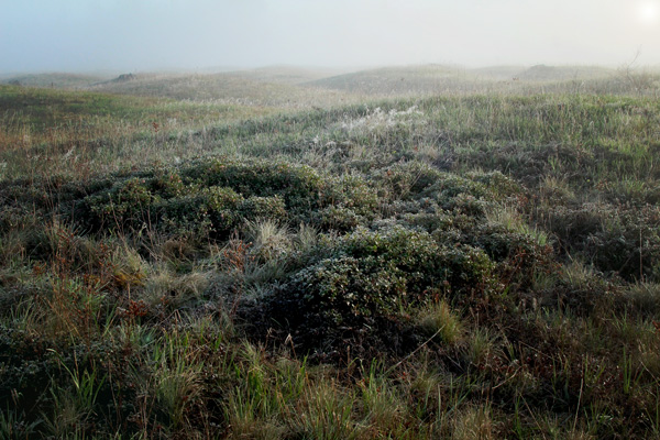 Mounds-of-Kinnickinnick