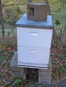 Bee-Cozy-Base-#1