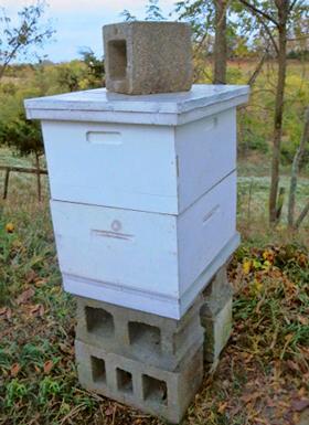 Bee-Cozy-Base-#2