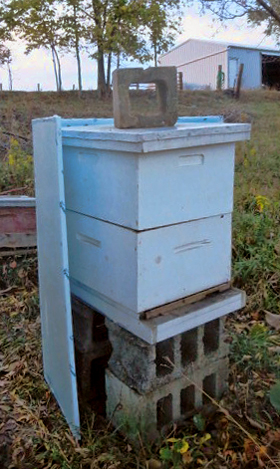 Bee-Cozy-base-#4