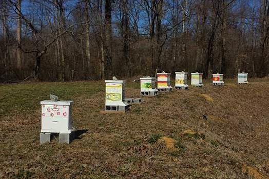 Robertson-apiary-524