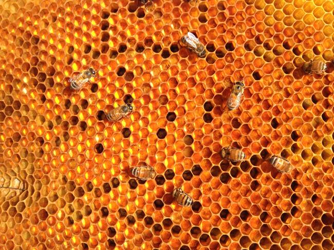 Frame-of-pollen. Bill Hesbach.