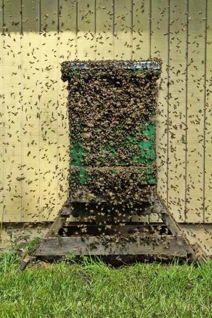 Swarm-moving-in