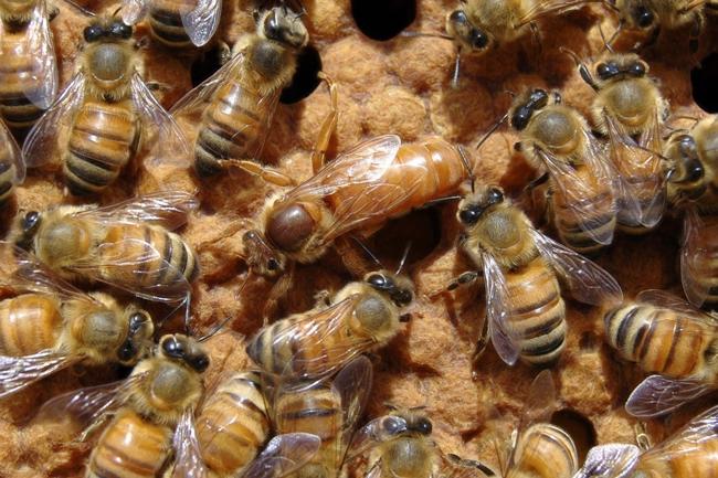 queen bee - photo #41