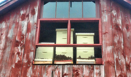 You can hide a beehive in a barn loft.