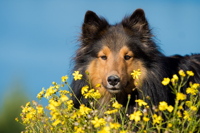 If your dog is prone to allergies, keep him away from the flowers where bees are plentiful.