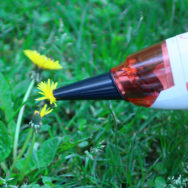 Mini-bee-vac cleaning a dandelion.