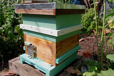 Hive with OA tool slot.